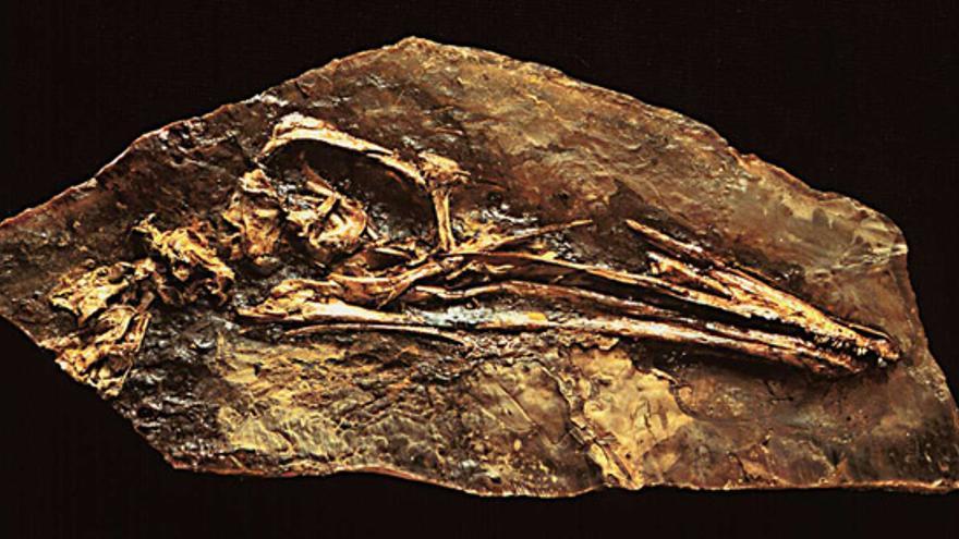 Restos fósiles en el Yacimiento de Las Hoyas (Cuenca)