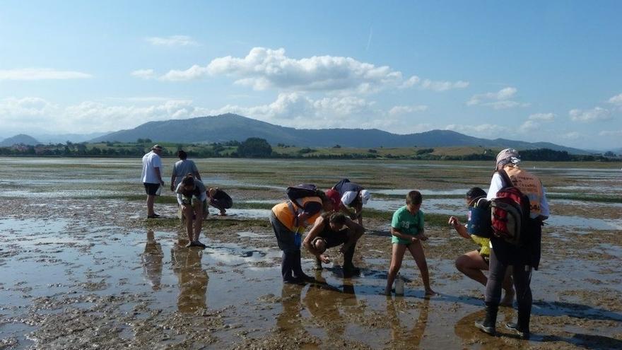 Pesca prohíbe la extracción de moluscos bivalvos de la Bahía de Santander por 'marea roja'