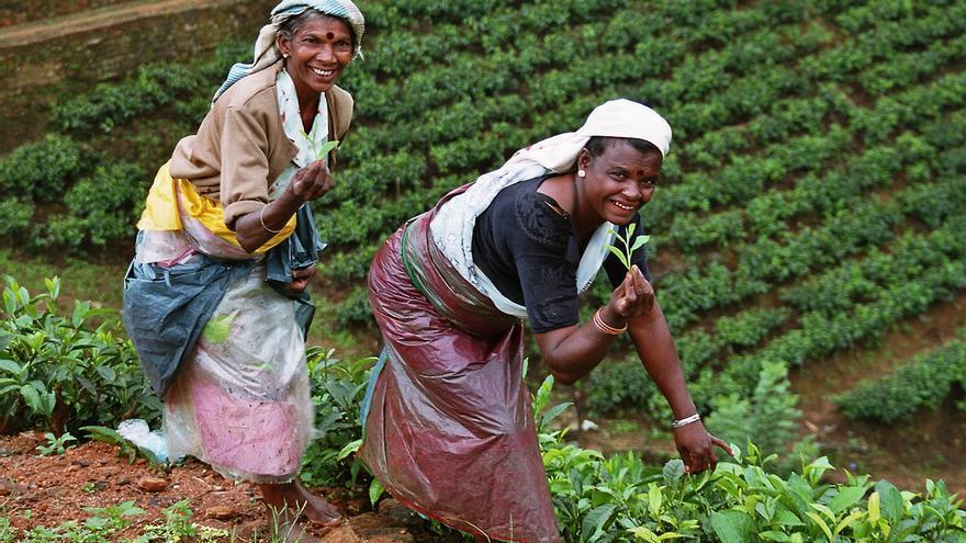 Recolectoras de hoja de té en el interior de Sri Lanka. Anja Leidel