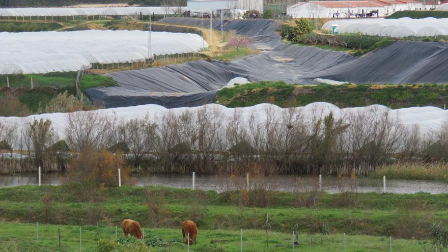 Zona de montes públicos de Almonte © Fuentelsaz WWF España