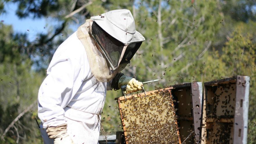 Recolección de abejas en Castilla-La Mancha