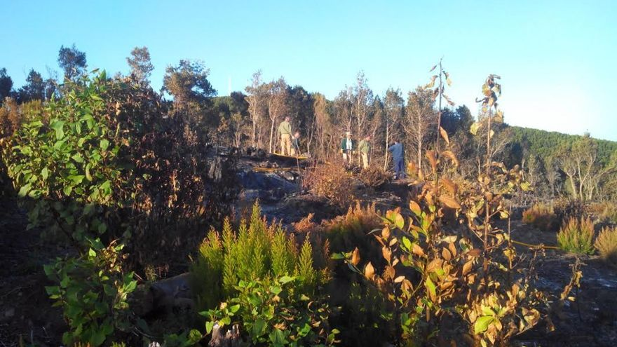 En la imagen, zona de unos 10.000 metros afectada por el fuego registado en el paraje de Las Caponas, en el la zona de Juan Adalid (Garafía).