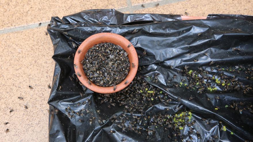 """Una plaga de moscas se expande por Gran Canaria: """"Nos van a enfermar, se nos quitan hasta las ganas de comer"""""""