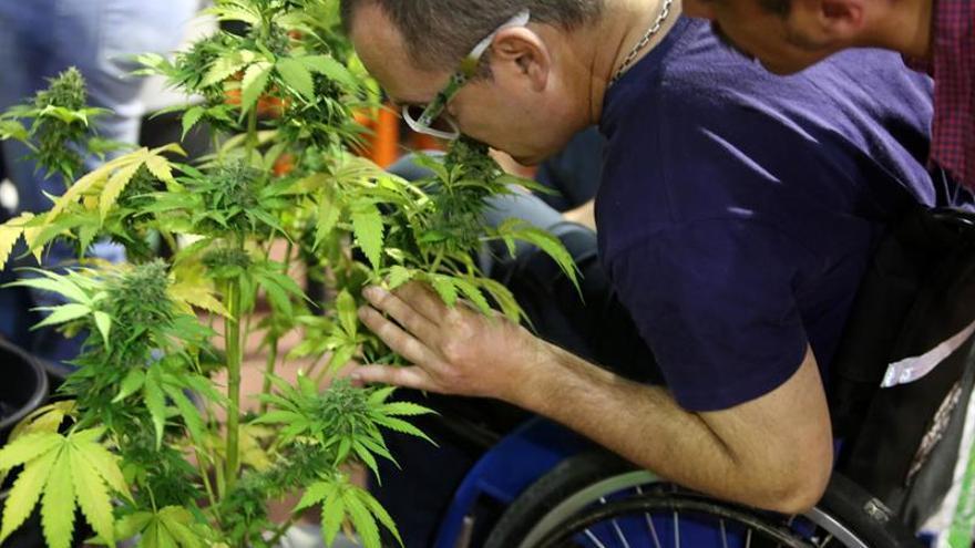 El Senado mexicano aprueba la regulación para el uso medicinal de la marihuana