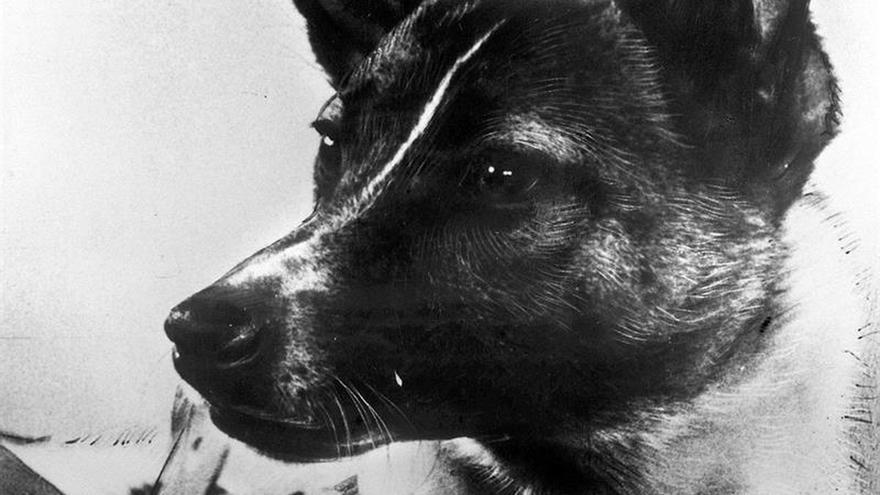 Laika, la perra que hace 60 años abrió las puertas del espacio a la humanidad
