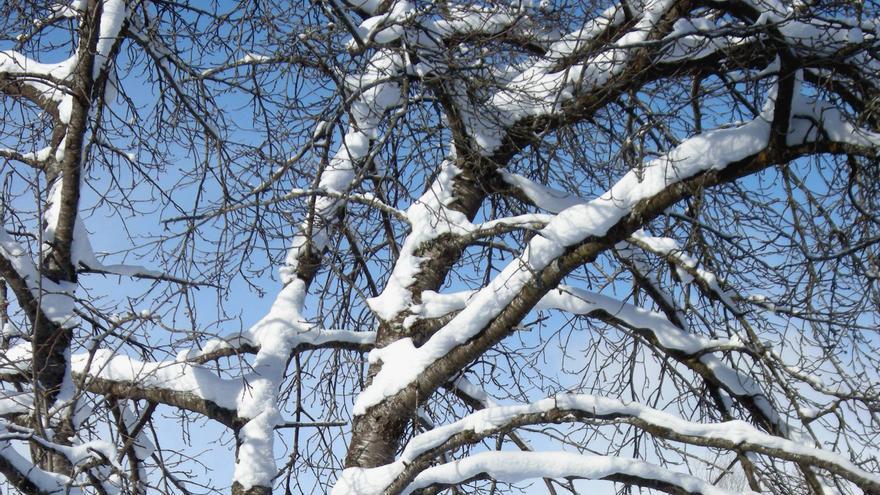 Activado el aviso amarillo por nieve y lluvias persistentes para este viernes