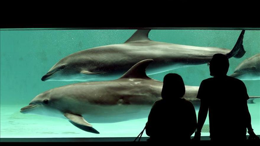 """Ruedan la replica nipona al documental """"The cove"""" sobre caza de delfines"""