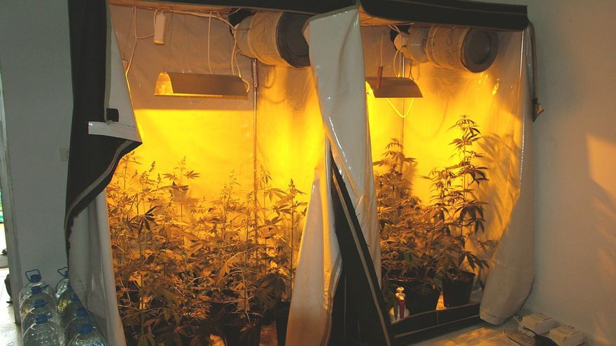 invernadero_marihuana_maspalomas_071227.jpg