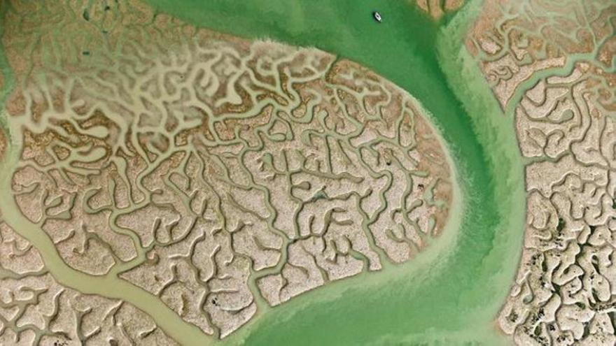 Desde su declaración en 1969 como parque nacional, hasta la fecha, Doñana ha sufrido varias transformaciones