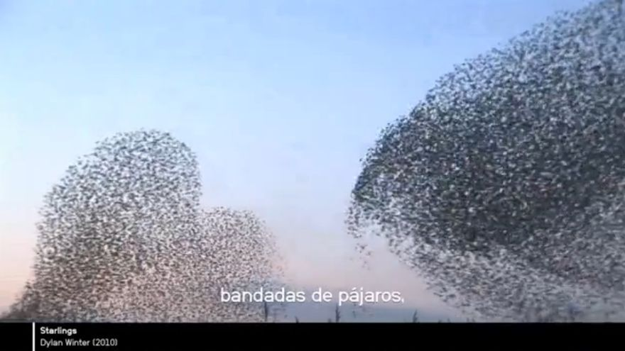 Documental Hello World, sobre Processing