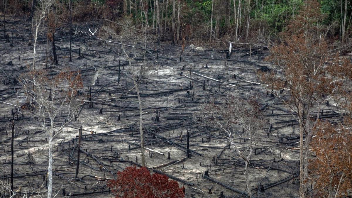 Maranhao, un estado del noreste de Brasil donde comienza la Amazonía y también donde la selva sufre las devastadoras consecuencias de los incendios intencionales que buscan terminar con la vegetación para destinar las tierras a la explotación agraria.