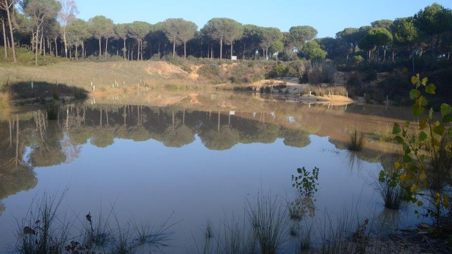 """Parlamento Europeo pide cerrar todos los pozos ilegales y que se """"detengan los pasos"""" del proyecto de gas en Doñana"""