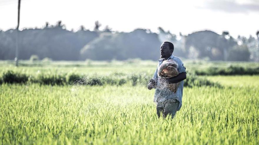 Asfixiar al mosquito: el uso pionero de drones contra la malaria en Zanzíbar