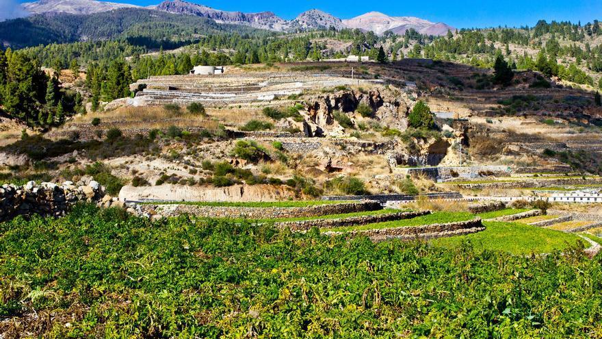 Las terrazas de cultivo dominan el paisaje de las medianías del Sur de Tenerife. VIAJAR AHORA