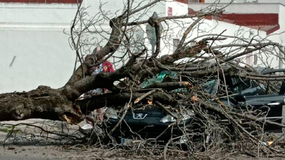 Imagen del coche aplastado por completo por el árbol caído.