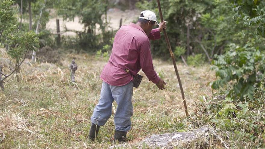Japón brinda apoyo a 4.775 personas del sur de Honduras afectadas por la sequía