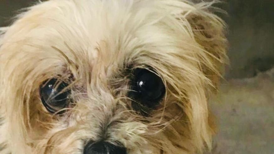 Lily a los pocos días de ser rescatada del criadero donde pasó diez años de infierno