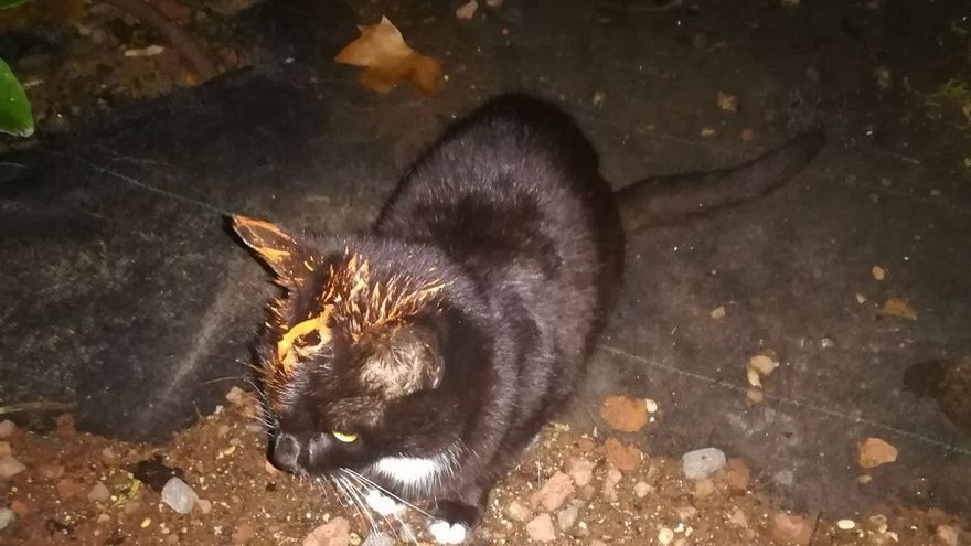 El último ataque sufrido por los gatos ha sido con pintura acrílica.
