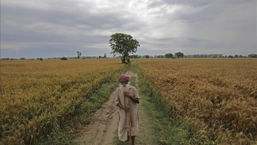 La fao defiende los derechos de los ind genas a la for Rotacion cultivos agricultura ecologica