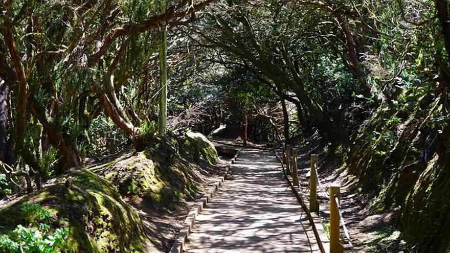 Sendero de los Sentidos, ubicado en el Parque Rural de Anaga./ webtenerife.com
