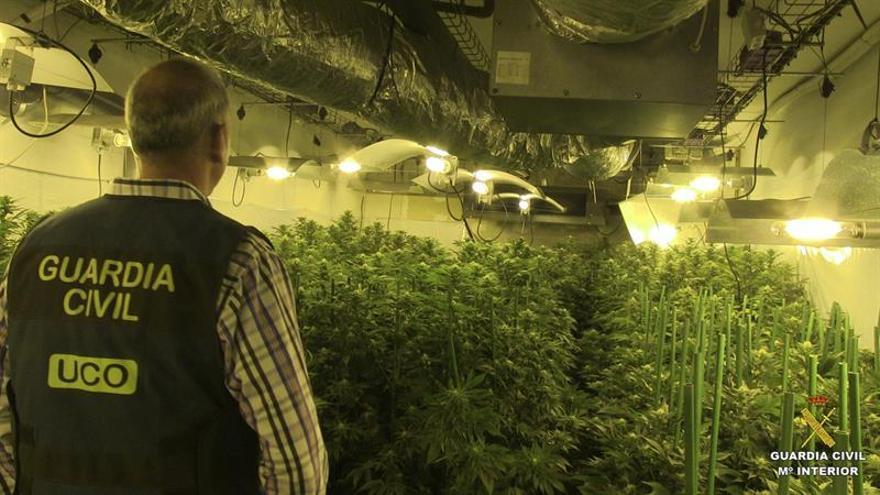 Inspecció de la Guàrdia Civil a una plantació de cànnabis