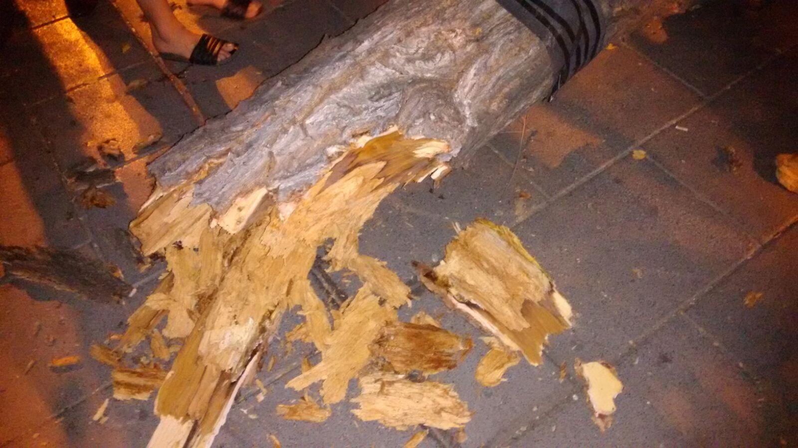Tronco partido del árbol caído | SOMOS MALASAÑA