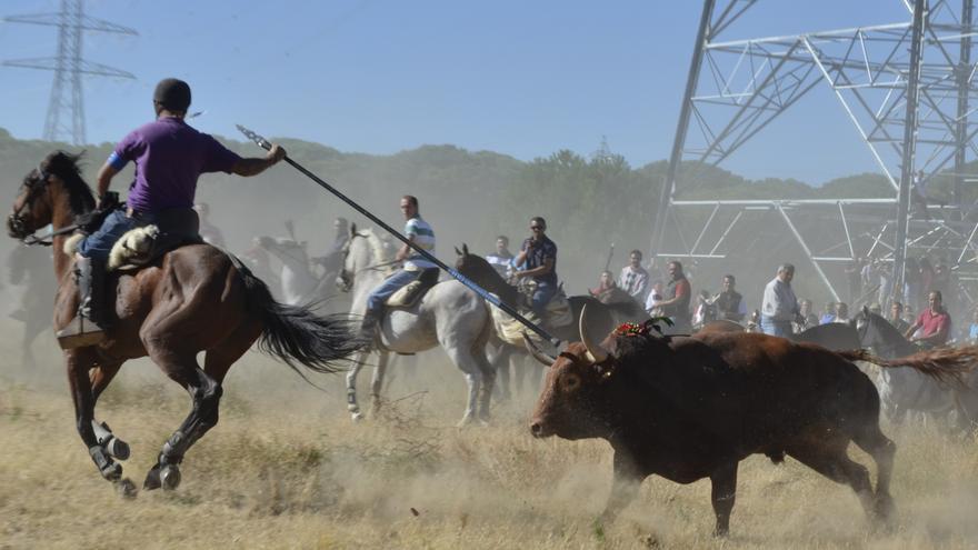 Torneo del Toro de la Vega en Tordesillas 2013