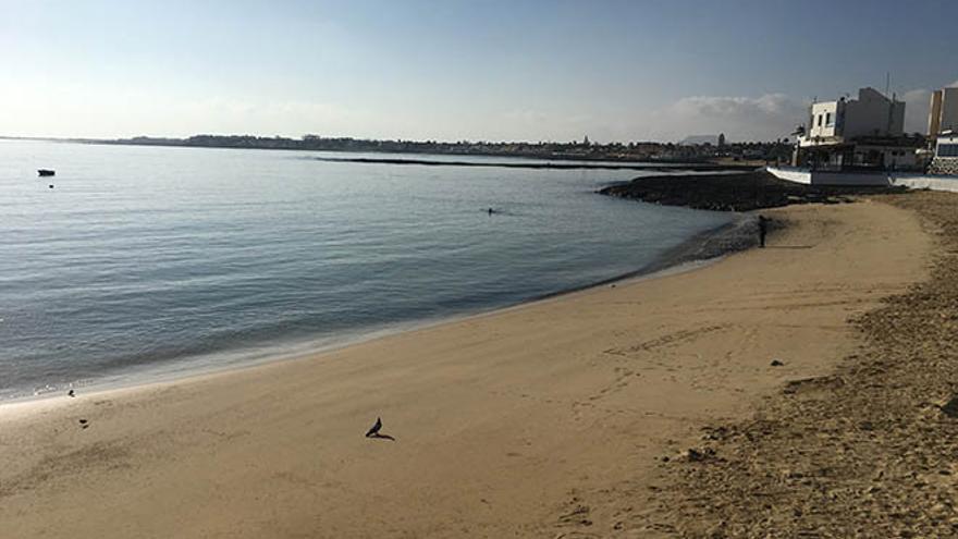 Playa del Muelle Chico de Corralejo.