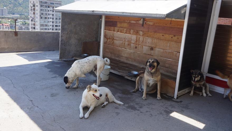La mayoría de los perros del refugio están mutilados por accidentes o maltrato. Foto: Almudena Alameda