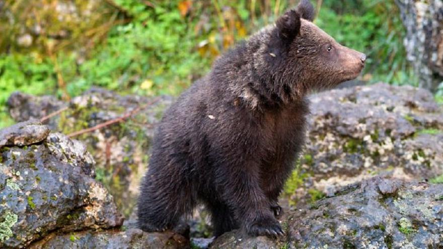 Uno de los osos del parque de El Hosquillo / Turismo Castilla-La Mancha