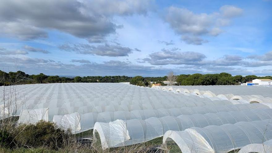 Cultivos bajo plástico en el Municipio de Lucena del Puerto